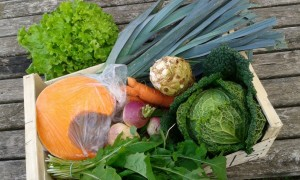 Panier légumes 20151118