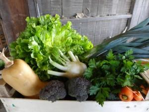 Panier légumes 20151216