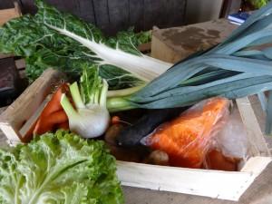 Panier légumes 20160106