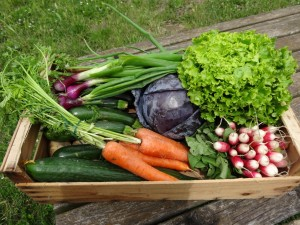 Paniers légumes 20160615