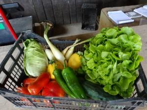 Panier de légumes du mercredi 12 juillet 2017