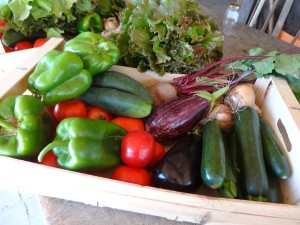 Panier légumes 20150805