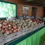 Présentation oignons et pommes de terre