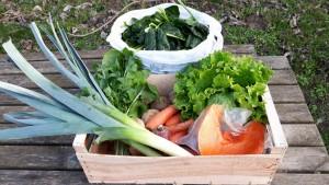 Panier légumes 20160120