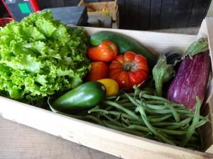 Panier légumes 20160713