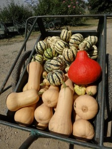 courges-divers
